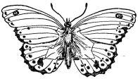 baden powells butterfly man